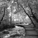 83 Plitvice in Black and White
