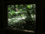 22nd Jan 2018 - Tropical view through the  garden shed window
