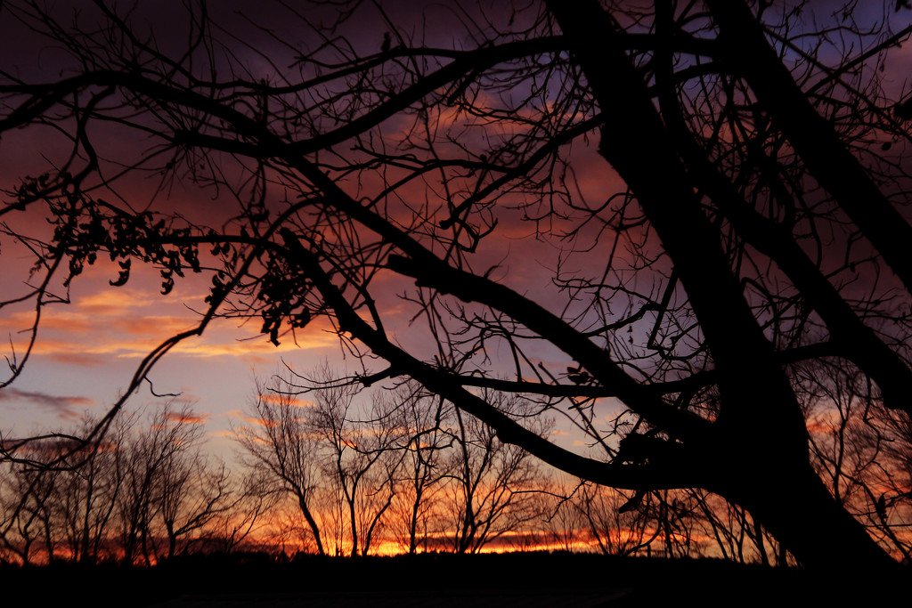 Sunset Colors by milaniet
