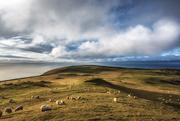 20th Jan 2018 - A sheep's eye view