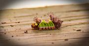 21st Jan 2018 - Bad Caterpillar on the Handrail!