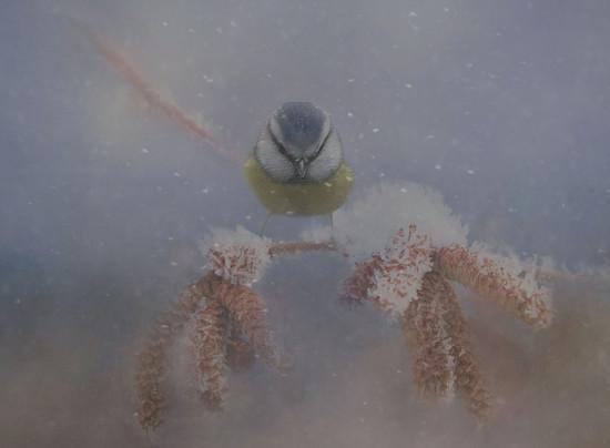 Winter Balance by jesperani