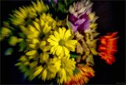22nd Jan 2018 - Floral Zoom Burst