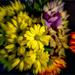 Floral Zoom Burst