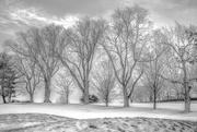 22nd Jan 2018 - winter trees