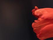18th Jan 2018 - Scalloped petal