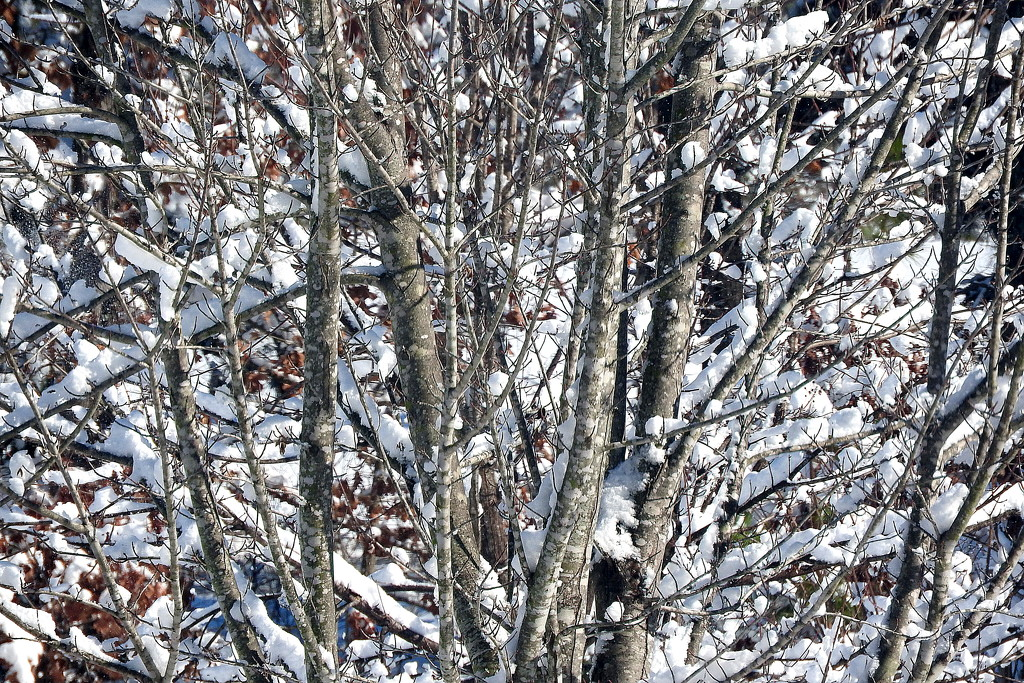 snow in the trees by homeschoolmom