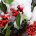 Holly Jolly Christmas in January!