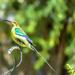 Malachite Sunbird doing Yoga by ludwigsdiana