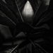 magnolia bud by kali66