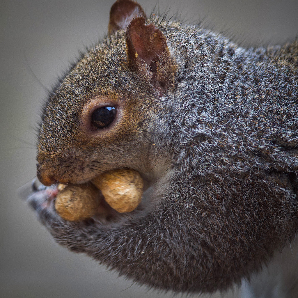 Rounding up the nuts by berelaxed