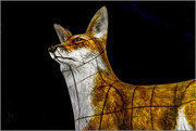 22nd Jan 2018 - 019 - Lumiere London - Fox at Leicester Square