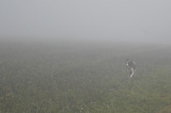 Fog and Dog by redandwhite