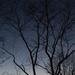 A Winter Twilight