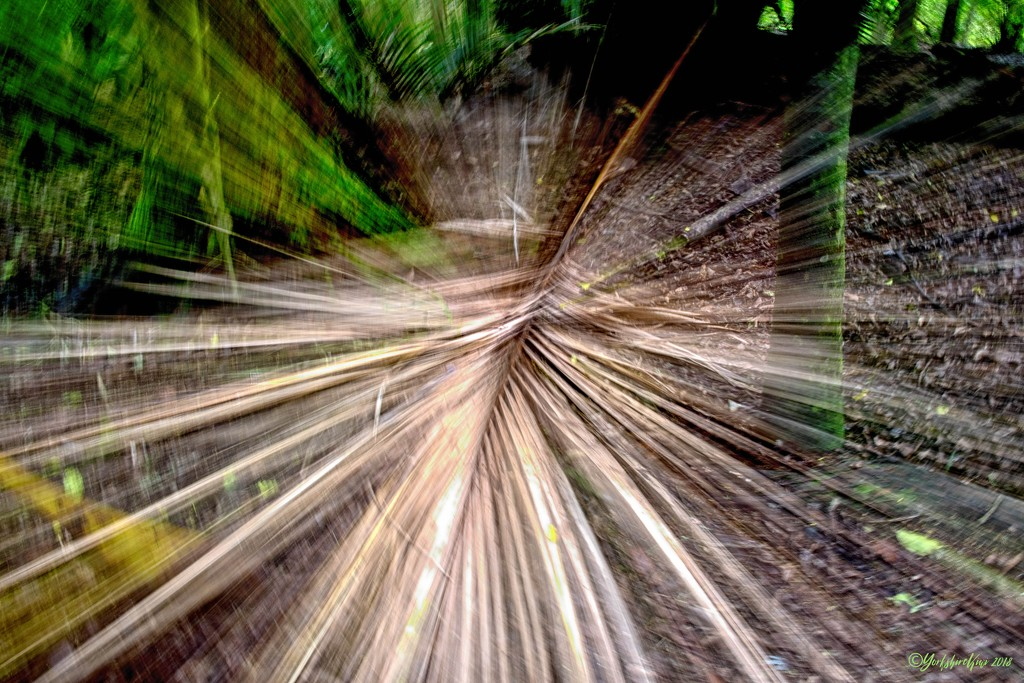 Zoom Burst by yorkshirekiwi