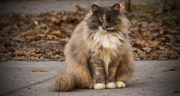 23rd Jan 2018 - Feral Cat With It's Winter Coat!
