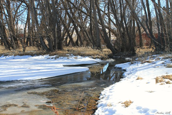 Cottonwoods by the Stream by harbie