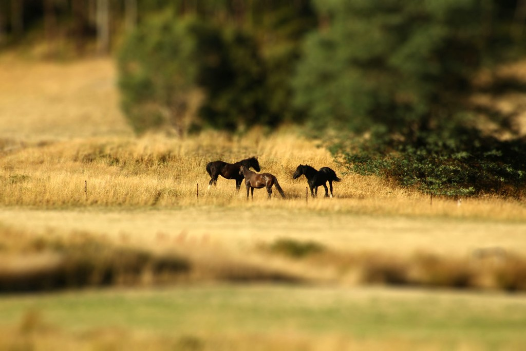 little horses by wenbow