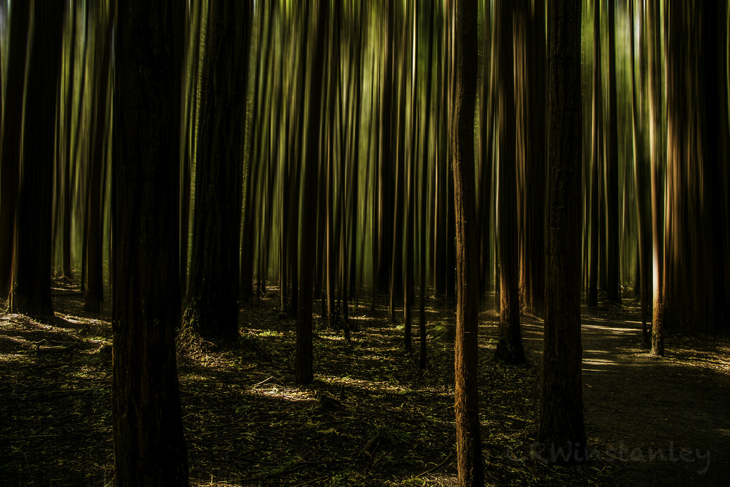 Walking through the Redwoods by kipper1951
