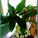 Tropical arrangement, when there is not much else around to arrange