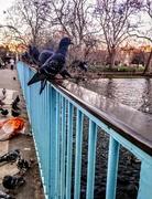 18th Jan 2018 - Feeding the birds