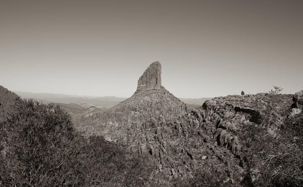weaver's needle by blueberry1222