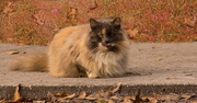 24th Jan 2018 - My Favorite Feral Cat in the Park!