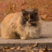 My Favorite Feral Cat in the Park! by rickster549