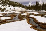 25th Jan 2018 - Meadow In Yellowstone