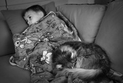 25th Jan 2018 - Sick Puppies
