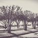 Bald Trees