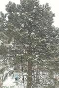 25th Jan 2018 - Snowy Day