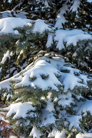 January Words - Snow by farmreporter