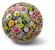 26th Jan 2018 - Flower Globe colour