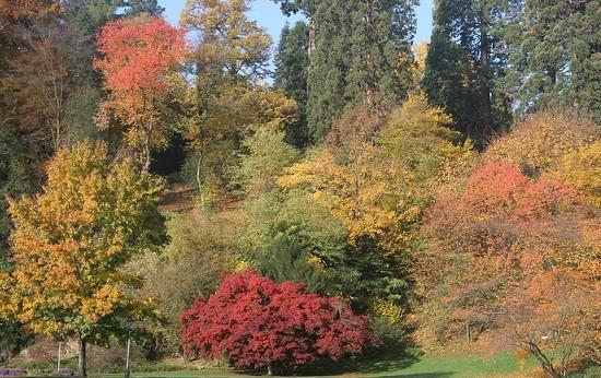 86 Autumn in Baden Baden by travel