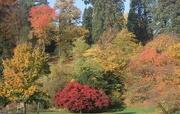 25th Dec 2020 - 86 Autumn in Baden Baden