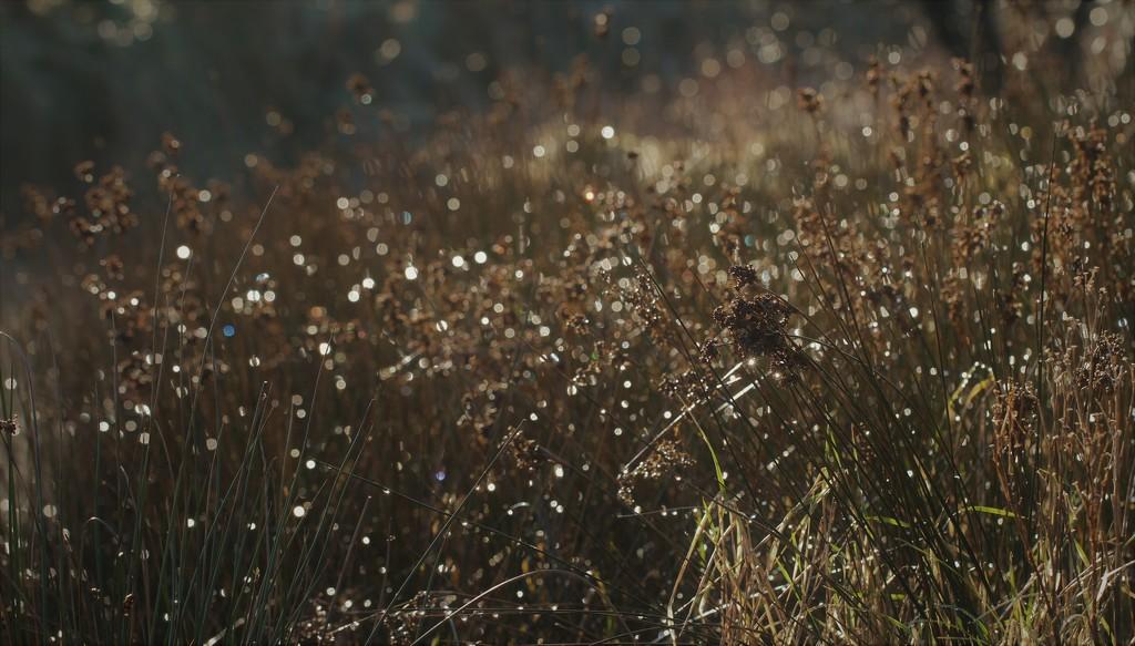 Reed Lights .... (For Me Album) by motherjane