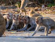 27th Jan 2018 - Cheeky Monkeys