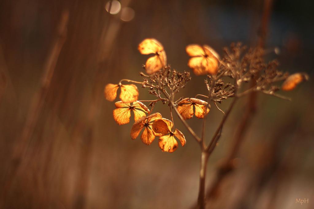 Warm winter by cherrymartina