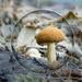 Mushroom Sphere by salza