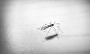 27th Jan 2018 - Bug