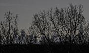 27th Jan 2018 - Chicago Skyline Scrim