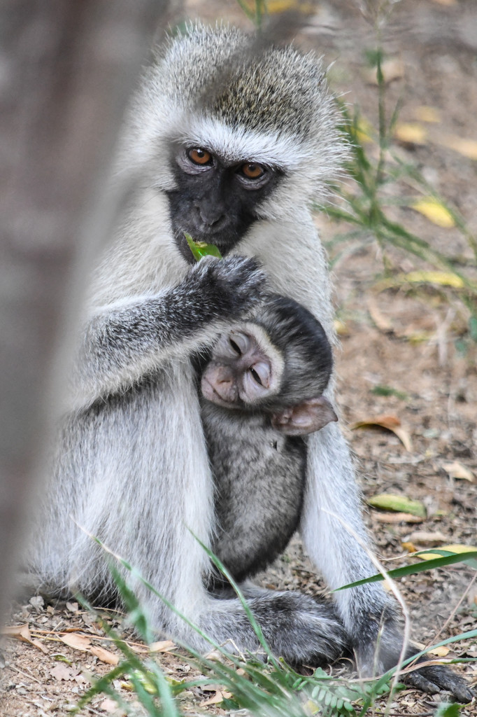 Content with Mama in the Wild by kareenking