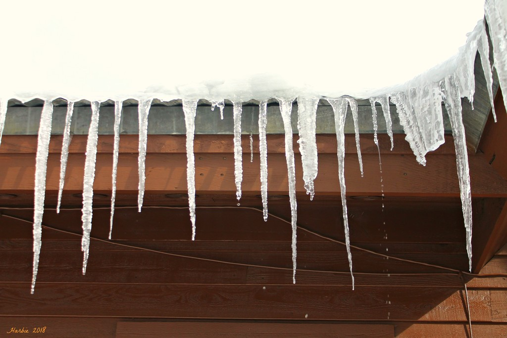 Melting Icicles by harbie
