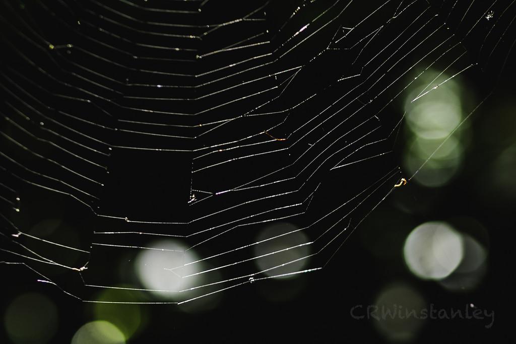 Web Network by kipper1951