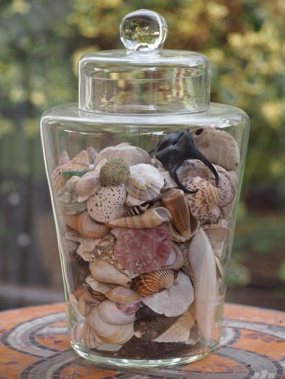 Shells by jacqbb