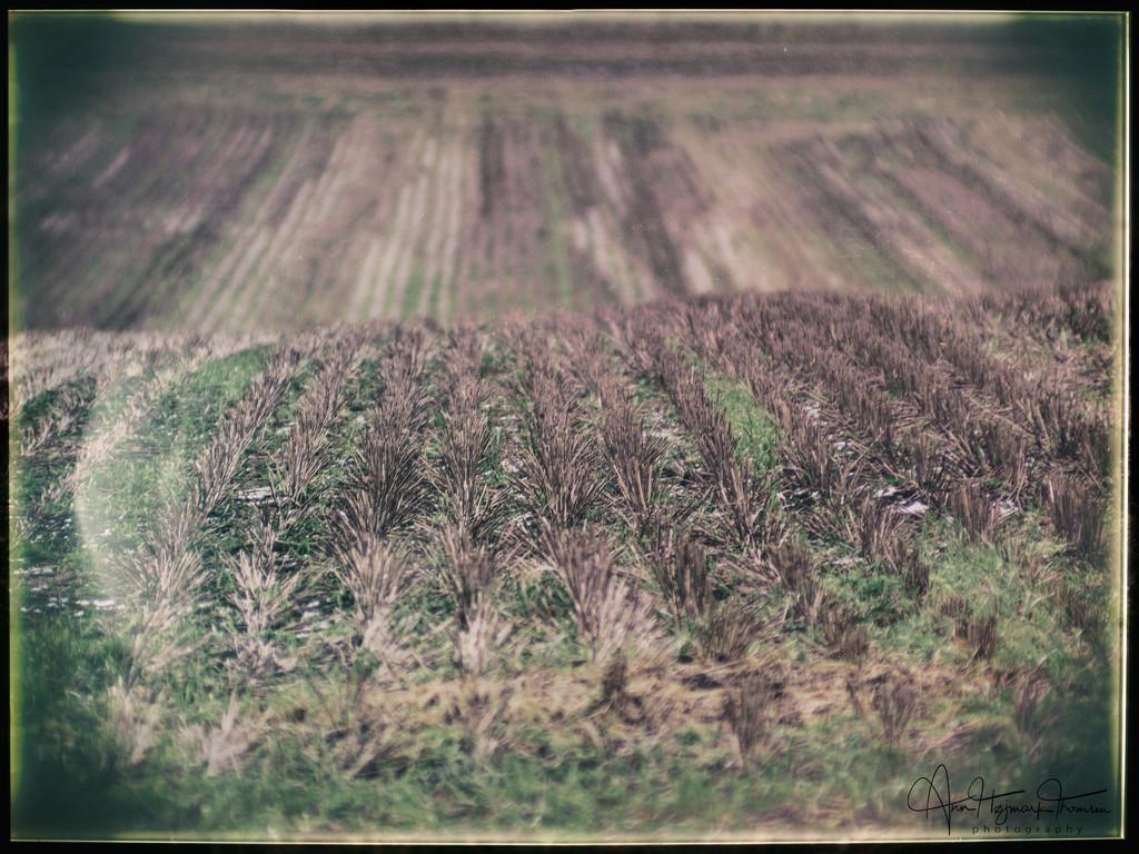 Stubble field by atchoo