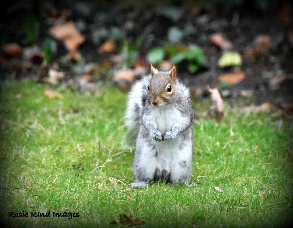 I really am quite a good Squizzer  by rosiekind