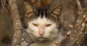 29th Jan 2018 - Grumpy Cat!