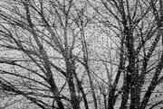 29th Jan 2018 - Rainy Day Window